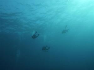 3人ダイバー浮遊